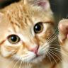 ABD Hava Kuvvetleri'nin Kediler Üzerinde Yaptıkları Deney Görüntüleri Paylaşıldı