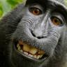 'Selfie Çeken Maymun' Davası Nihayet Sonuçlandı!