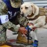 Meksika Depremi Enkazlarından 52 Can Kurtararak Kahraman Olan Köpek!