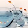 Balıkların Bile Karmaşık Bir Kişiliğe ve Karaktere Sahip Oldukları Keşfedildi!