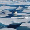 Kuzey Kutbu'nda Doğal Hayat, Plastik Atıklar Nedeniyle Tehlikeye Girdi!