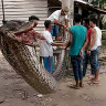 Endonezyalılar, Avlanmaya Gelen Dev Pitonu Çok Fena Avladılar