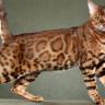Avustralya'da Birer Ölüm Makinesine Dönüşen Kedilere Önlem Alınamıyor