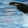 Balinalar ve Yunusların 'İnsanlar Gibi' Bir Hayat Sürdürdükleri Ortaya Çıktı