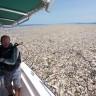 Karayip Denizi'ndeki Şoke Eden Plastik Çöp Katmanı