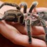 Bilim İnsanları: 6 Aylık Bebekler Bile Ne Olduğunu Bilmedikleri Yılan ve Örümceklerden Korkuyorlar