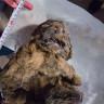 Nesli Tükenmiş Aslanın Rusya'da Donmuş Kalıntıları Bulundu!