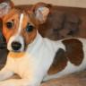 Köpek Sahibi Olanların Ölüm Riskinin Daha Az Olduğu Ortaya Çıktı