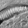 Solucanlar, Kızıl Gezegen Mars'tan mı Geldiler?