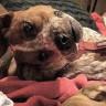 İnsanların Beynini Yakıp Reddit'de Gündem Olan Bükülmüş Köpek Fotoğrafı
