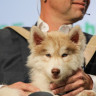 Köpek Bakıcısı Bulma Uygulaması Wag'dan Yeni Fonlandırma Girişimi