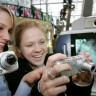 En İyi Kamera Hangi Telefonda?