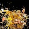 Mikrodalga Fırında Isıtılan Pişmiş Yumurtalar Neden Patlar?