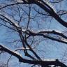 Sosyal Medyayı Ayağa Kaldıran Görüntü: Kuşlar Konmasın Diye Ağaçlara Diken Yerleştirdiler