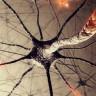 Beyin Hücrelerimiz Hakkında, 100 Yıllık Gerçeği Tarihe Gömen Keşif!