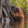 National Geographic Tarafından Seçilen, Yılın Fotoğrafının Hikayesi