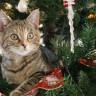 Bilim Açıklıyor: Kediler, Yılbaşı Ağaçlarına Neden Saldırıyorlar?