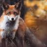 2017'ye Damgasını Vuran Doğa Fotoğrafçısından 17 Mükemmel Kare!