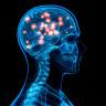 Beynimiz Neden Son Anda Fark Ettiği Kötü Eylemi Durduramaz?
