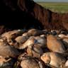 Kazakistan'da Aniden Ölen 200.000 Antilobun Katili Ortaya Çıktı!