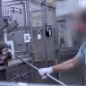 Laboratuvar Maymunlarının Ölümleri ABD'de Hayvan Testleri Hakkında Soruları Yükseltiyor