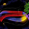 Gen Değiştirme Teknolojisi CRISPR'ın Dünyayı Değiştirebileceğinin 5 Örneği