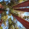 30 Yıl Boyunca Çocuğu Gibi Baktığı Ağacı Kesilen Adamın Viral Olan İntikamı!