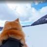 Google Street View'de Japonya Sokaklarını İki Tatlı Akita Cinsi Köpekle Keşfedin