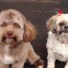 Hem Sevimli Hem de Ürkütücü İnsansı Yüzü ile Viral Olan Köpek!