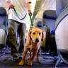 En Fazla Evcil Hayvan Ölümüne Sebep Olan Uçak Firmaları
