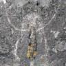 Grönland'da Eklem Bacaklıların Atası Olduğu Keşfedilen 520 Milyon Yıllık Fosil Bulundu