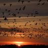 Kuşların, Dünya'nın Manyetik Alanını Fiziksel Olarak Görebildiği Keşfedildi!