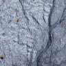 Grönland'ın Buz Tabakasının Erimesini Algler Hızlandırıyor Olabilir