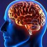 İnsan Beyni İleri Yaşlarda da Öğrenmeye ve Gelişmeye Devam Ediyor