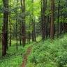 Tasarı Kabul Edildi: Ormanlar, 5 Yıl Boyunca Özel Şirketlere Kiralanıyor!