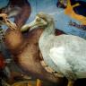 Soyu Tükenen Bir Kuş Olan Oxford Dodo Kafasından Vurulmuş