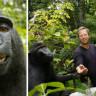 """Selfie Çeken Maymun Davasında Yeni Karar: """"Tüm Telif Fotoğrafçı Slater'a Ait"""""""