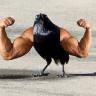 """""""Kuşlar Kanatsız Olsaydı Nasıl Görünürdü?"""" Sorusuna Cevap Olacak Photoshop Çalışmaları"""