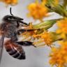 Avrupa Birliği, Arılara Zarar Veren İlaçların Kullanımını Yasakladı