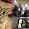 Facebook, Kedi ve Düğün Videolarıyla Yetinmiyor, Şirket Bu Tür Videoları Birer Şov Haline Getiriyor