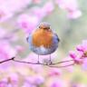 Mevsim Değişimleri Canlıları Nasıl Etkiler?