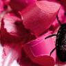 Türkiye'de Satılan İçecek ve Yiyeceklerin Hemen Hepsinde Bulunan Böcek