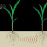 Bitkilerin Birbirleriyle Yer Altından İletişim Kurdukları Keşfedildi!