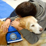 Köpek Dostlarınız, Çok Daha İyi Hissetmenizi Sağlıyor