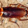Hamam Böceklerini Öldürülemez Yapan Şey Nedir?