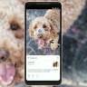 Google Lens Bazı Cihazların Kamerasına Entegre Çalışmaya Başladı
