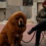 Bir Kadının Sahiplendiğini Sandığı Köpeğin 'Ayı' Olduğu Ortaya Çıktı