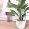 Flower Power H20 ile Bitkilerinizi Kontrol Edin