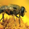 Bal Arılarının 4'e Kadar Sayabildiklerini Biliyor muydunuz?