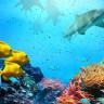 Okyanus Derinliklerinde Yaşayan Balıkların Gerçek Seslerini Duymamızı Sağlayan Proje